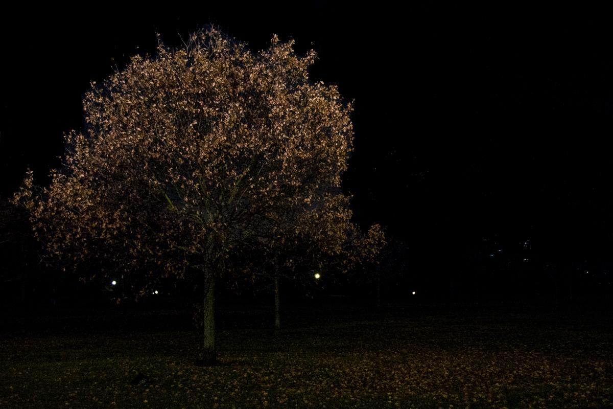 Paysage urbain - Hide Park - Londres